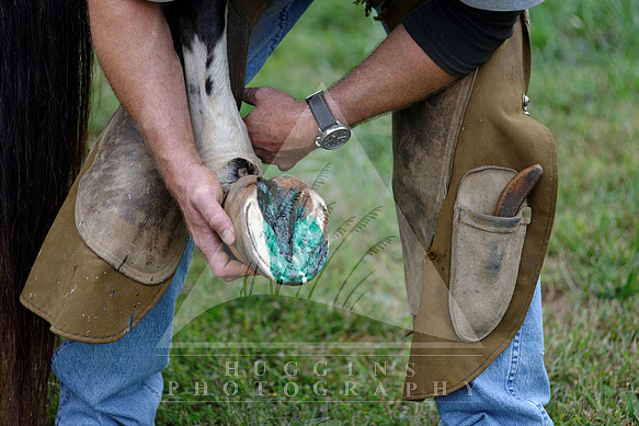 A farrier works on a hoof