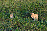Farm cats in the grass